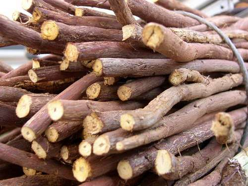 Eficacia probada del extracto de la raiz del regaliz chino